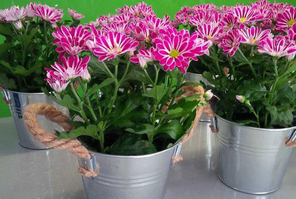Composición floral en cubos de latón