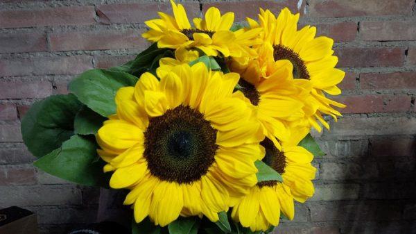 Amplia gama de flor natural