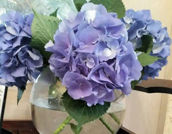 flores frescas de temporada