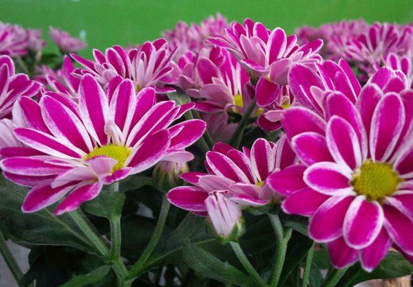 Amplia gama de flores naturales