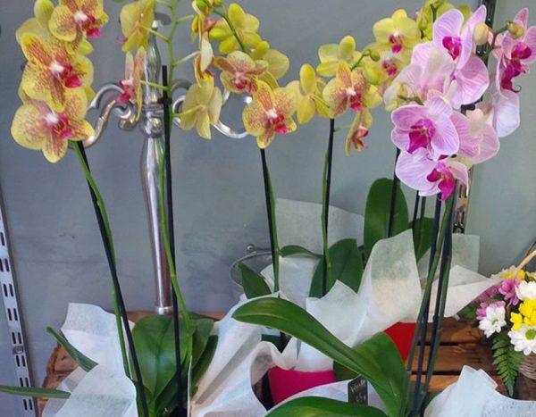 Orquídeas de temporada